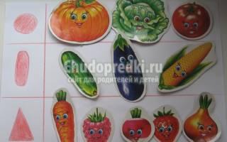 Аппликация из овощей: шаблоны в старшей группе