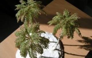 Пальма из бисера: мастер класс своими руками