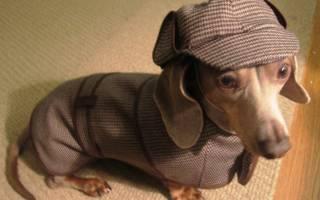 Выкройки одежды для собак: пошив одежды и схемы